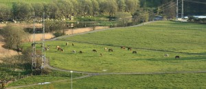 Hesteflokken på beitet ved elva