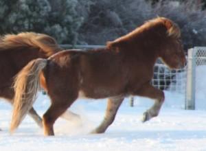 Tokki i snøen