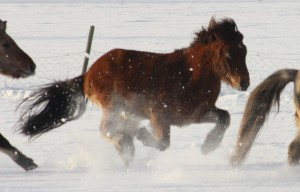 Loki i full galopp i snøen