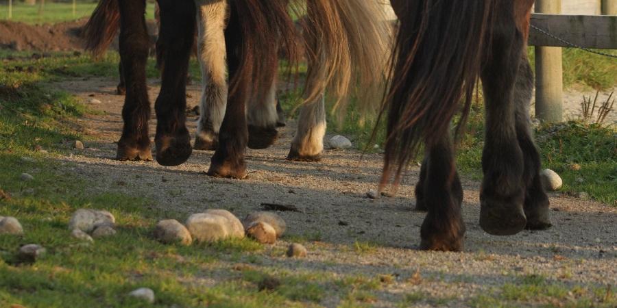 Hester på turrekke
