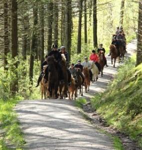 Ridegruppe i full galopp