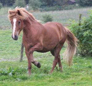 Rød hest uten navn