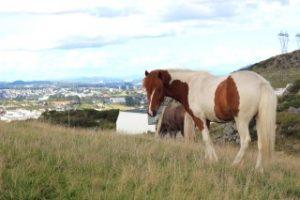 Tvífarí og Fengur nyter utsikten over Sandnes og Stavanger